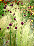 blommar wild Arkivbilder