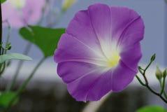 blommar wild Royaltyfria Bilder