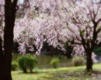 blommar wild royaltyfri fotografi