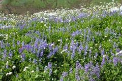 blommar wild Arkivfoton