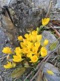 blommar wild Royaltyfri Foto