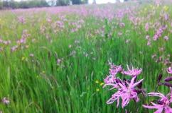 blommar wild Arkivfoto