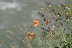 blommar wild berg Arkivfoto