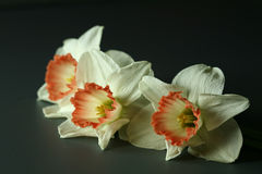 blommar yelow Royaltyfria Bilder