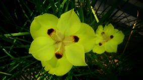 blommar yelow fotografering för bildbyråer