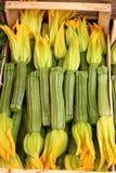 blommar zucchinien Arkivbild