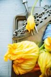 blommar zucchinien Arkivfoto