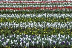 Blommarader Arkivbild