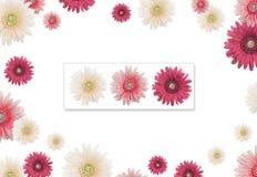blommaram Fotografering för Bildbyråer