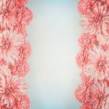 Blommaram för pastellfärgade rosa färger på gränsen - blå bakgrund, bästa sikt Blom- orientering Arkivfoto