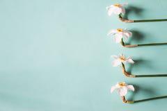 Blommaram som göras av pingstlilja på en neutral grön bakgrund Till Arkivfoton