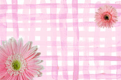 blommaramfjäder Royaltyfri Fotografi