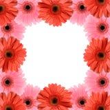 blommaramgerber Royaltyfri Foto