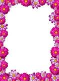 blommarampink Arkivbild