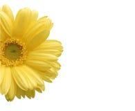 Blommaramvektor Royaltyfri Fotografi