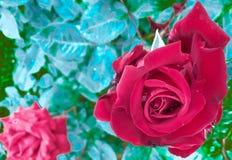 blommared steg Arkivfoto