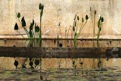 Blommareflexion arkivbild