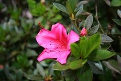 blommarica för 04 costa Royaltyfri Fotografi