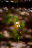 Blommarosa färger Royaltyfria Bilder