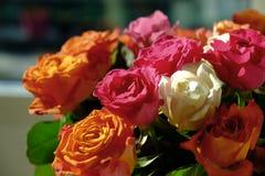 Blommarosbakgrund Härligt slut upp av ljust färgrikt r Arkivbilder