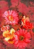 blommarost Arkivbild