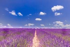 blommas ändlösa Europa fält blommar provence för den france lavendelplatån rader vädrad valensole Valensole platå, provence, fran royaltyfri foto