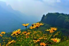 blommas blommor royaltyfria bilder