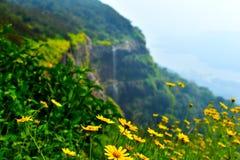 blommas blommor arkivfoto