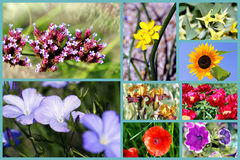 blommas blommor Arkivbild
