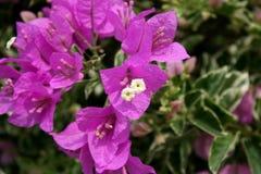 blommas blommor fotografering för bildbyråer