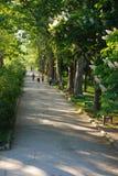 blommas kastanjebruna trees trädgårds- väg gröna trees vårsommartid Royaltyfri Foto