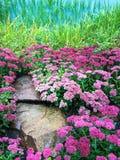 Blommas purpura blommor Fotografering för Bildbyråer