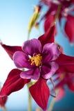 blommas röda blommapetals Arkivbild