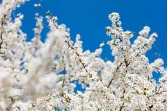 blommas trees Royaltyfria Bilder