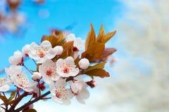 blommas trees Arkivbild