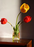 blommas tulpan Royaltyfria Bilder
