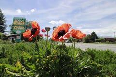 BlommasalidaDenver orange sikt Arkivbilder