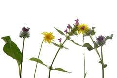 blommasamtal Arkivbilder
