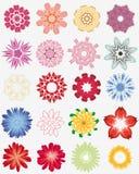 blommaset Arkivbild