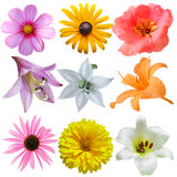 BlommaSet Arkivfoton