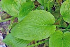 Blommasidor efter regnbakgrund Arkivfoton