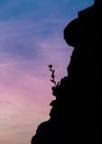 blommasilhouette Royaltyfri Fotografi