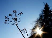 blommasilhouette Arkivfoto