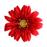 blommasilk Royaltyfri Bild