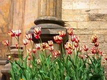 Blommaskönheten Arkivbilder
