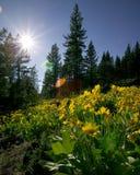 blommaskogen sörjer royaltyfria bilder