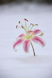 blommasnow fotografering för bildbyråer