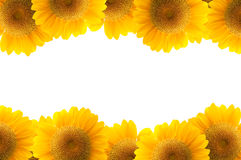 blommasolros Royaltyfri Fotografi