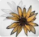 Blommasolros, hand-teckning. Vektor. vektor illustrationer
