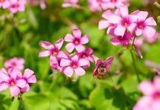 blommasolsken Arkivfoton